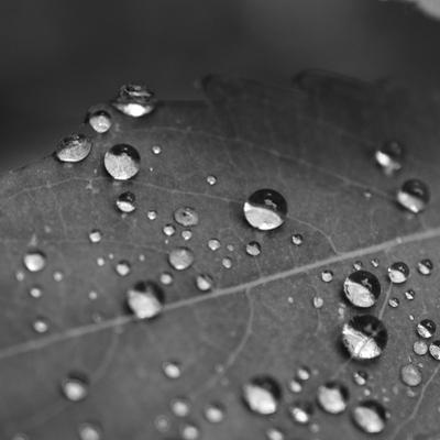 Raindrops on a Leaf by Amy & Al White & Petteway