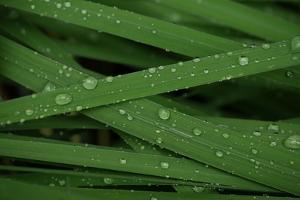 Raindrops on Grass Blades after a Storm by Amy & Al White & Petteway