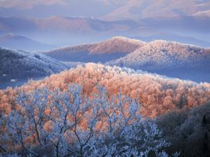 Snow and Rime Ice Coat a Blue Ridge Mountain Landscape at Dawn by Amy & Al White & Petteway