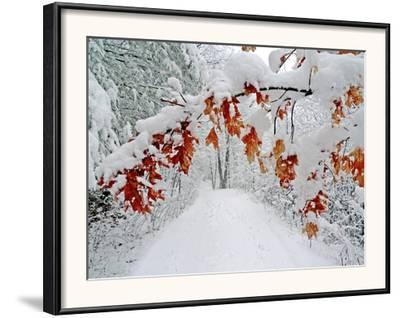 Snow Arches an Oak Tree Branch over a Road Through a Snowy Forest by Amy & Al White & Petteway