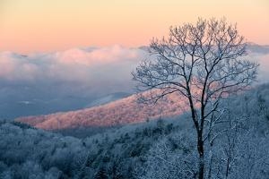 Sunrise Casts a Pink Hue on Rime Ice in the Blue Ridge Mountains by Amy & Al White & Petteway