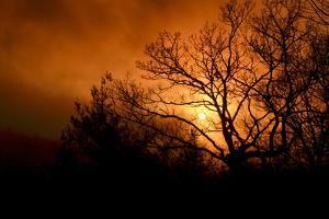 The Setting Sun Seen Through Heavy Cloud Cover and Silhouetted Tree Branches by Amy & Al White & Petteway
