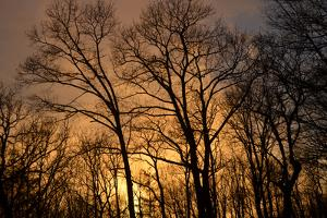 The Setting Sun Seen Through Heavy Cloud Cover and Silhouetted Trees by Amy & Al White & Petteway