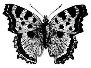 Butterfly 1 Black by Amy Brinkman