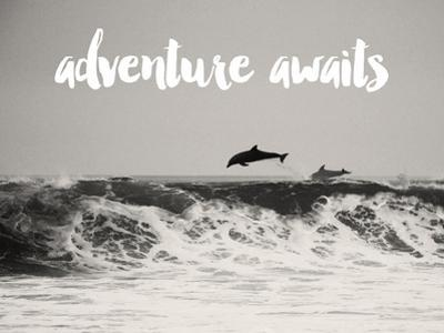 Dolphins Adventure White by Amy Brinkman