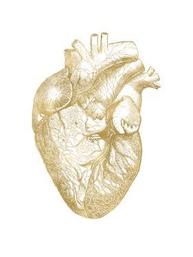 Heart Anatomical Golden White by Amy Brinkman