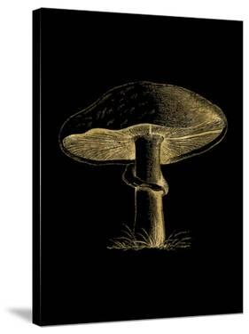 Mushroom Golden Black by Amy Brinkman