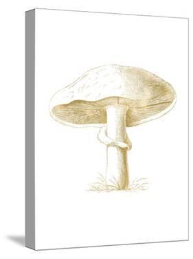 Mushroom Golden White by Amy Brinkman