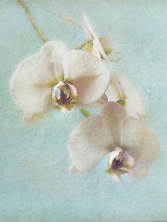 Aqua Floral I by Amy Melious