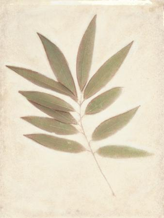 Bay Leaves by Amy Melious