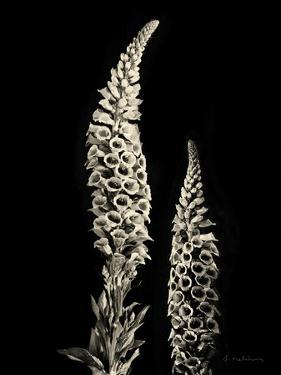 Botanical Elegance Foxglove by Amy Melious