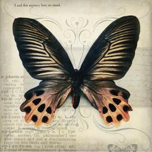 Butterflies Script IV by Amy Melious