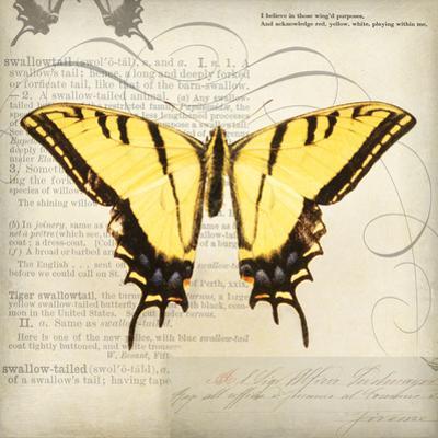 Butterflies Script V by Amy Melious