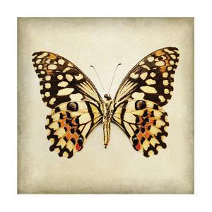 Butterfly 6 by Amy Melious
