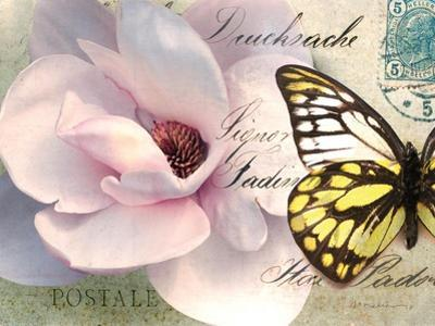 Carte Postale Magnolia II by Amy Melious