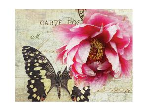 Carte Postale Peony by Amy Melious