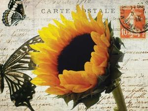 Carte Postale Sunflower by Amy Melious