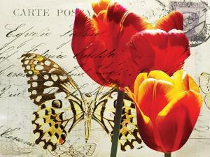 Carte Postale Tulip II by Amy Melious
