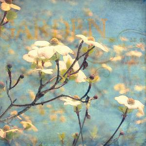 Dogwood II - Blossoming Tree by Amy Melious