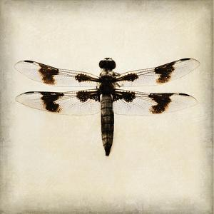 Dragonfly II by Amy Melious