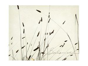 Grass Balance by Amy Melious
