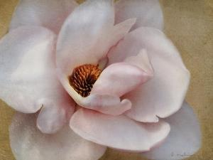 Pink Magnolia by Amy Melious