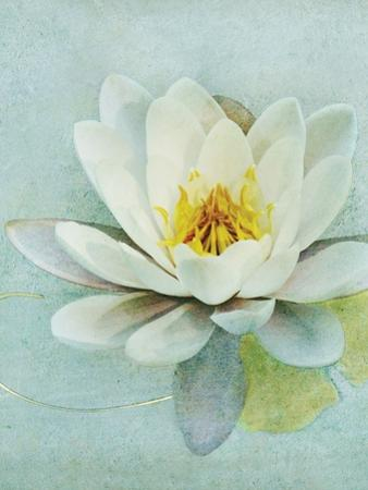 Pond Lily by Amy Melious