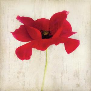 Red I by Amy Melious