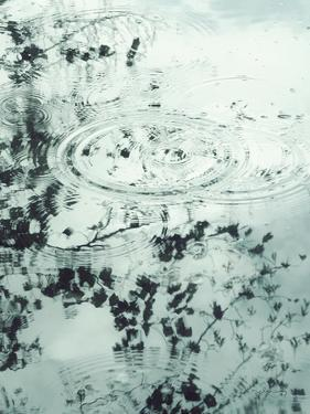 Ripples of the Rain II by Amy Melious