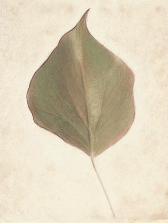 Single Leaf by Amy Melious