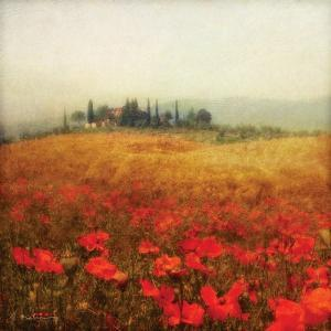 Tuscan Poppies by Amy Melious