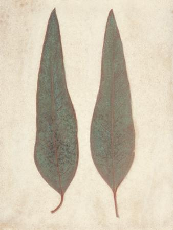 Two Leaves by Amy Melious