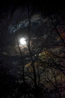 The Full Moon Creates Rainbows in the Clouds, Seen Through Silhouetted Tree Branches by Amy White and Al Petteway