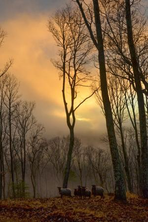 The Setting Sun Pokes Through Heavy Cloud Cover as a Small Flock of Sheep Stand in the Distance by Amy White and Al Petteway