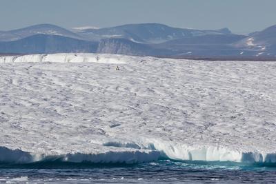https://imgc.allpostersimages.com/img/posters/an-adult-polar-bear-ursus-maritimus-on-a-huge-iceberg-in-arctic-harbour_u-L-PQ8OAZ0.jpg?p=0