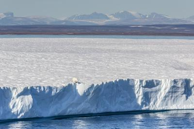 https://imgc.allpostersimages.com/img/posters/an-adult-polar-bear-ursus-maritimus-on-the-edge-of-a-huge-iceberg-in-arctic-harbour_u-L-PQ8OIB0.jpg?artPerspective=n