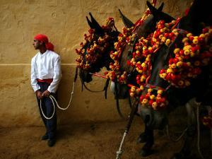 An Assistant of the Spanish Rejoneador Mounted Bullfighter Pablo Hermoso