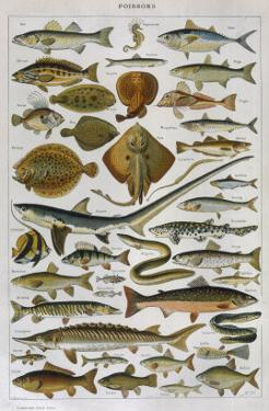 An Assortment of Fish