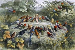 An Elf and Birds