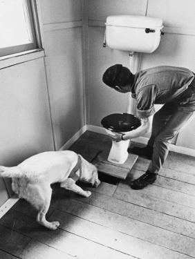 An Excited Army Sniffer Dog Sniffs under the Floorboards Near the Toilet