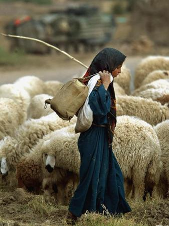 An Iraqi Shepherd, a Young Girl, Herds Her Sheep