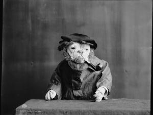An Old Sea Dog, Literally