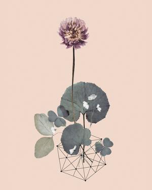 Make A Wish by Anahata Katkin