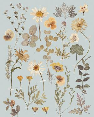 Pressed Petals by Anahata Katkin