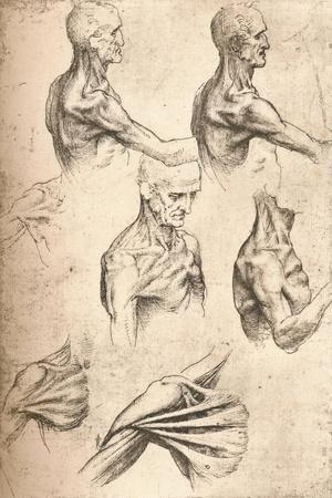 https://imgc.allpostersimages.com/img/posters/anatomical-drawing-c1472-c1519-1883_u-L-PY7VHF0.jpg?p=0