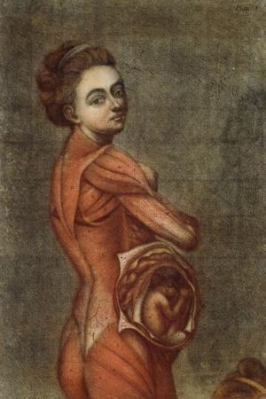 https://imgc.allpostersimages.com/img/posters/anatomical-illustration-in-colour-of-a-pregnant-female-1778_u-L-PPSNLS0.jpg?artPerspective=n