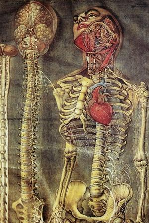 https://imgc.allpostersimages.com/img/posters/anatomical-model-18th-century_u-L-PZH9A20.jpg?artPerspective=n