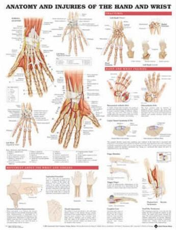 Anatomy and Injuries of the Hand and Wrist Anatomical Chart Poster Print