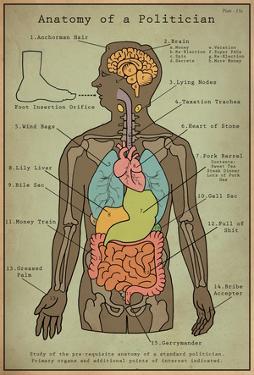 Anatomy Of A Politician