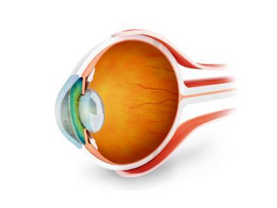 Anatomy of Human Eye, Perspective